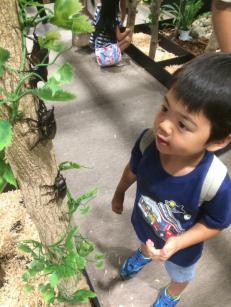 スカイツリー、大昆虫展行ってきました♪|美容院の最新記事